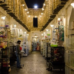 bookingvision- tours in qatar